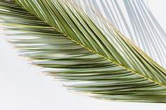 Palmblad som gjuter skugga på en himmelsk bakgrund Inget bakgrund arkivfoto