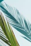 Palmblad som gjuter skugga p? en himmelsk bakgrund Inget bakgrund arkivfoto