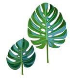 Palmblad som isoleras på en vit bakgrund Stock Illustrationer