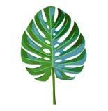 Palmblad som isoleras på en vit bakgrund royaltyfri illustrationer