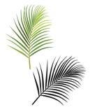 Palmblad svart och gräsplan Fotografering för Bildbyråer