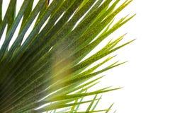 Palmblad tegen de hemel, palmen op de tropische kust, zuidelijke boom, palm in zonlicht stock afbeelding