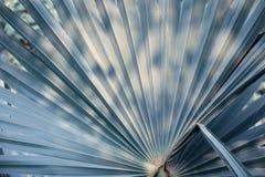 Palmblad, Textuur en patroon van een groen blad, Vers groen blad van tropische palm royalty-vrije stock foto's