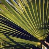 Palmblad - uitstekend effect Zonlichtdalingen door palmblad royalty-vrije stock afbeeldingen
