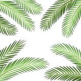 Palmblad Vectorachtergrond Stock Afbeelding