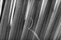 Palmblad zwart-wit beeld stock afbeeldingen