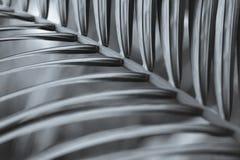 Palmblad zwart-wit beeld Royalty-vrije Stock Afbeelding