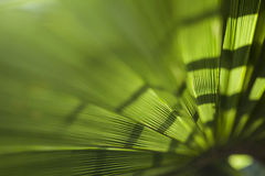 Palmbladachtergrond Royalty-vrije Stock Afbeelding