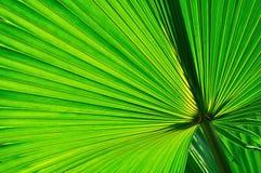 Palmbladachtergrond Royalty-vrije Stock Foto's