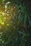 Palmbladdjungelbakgrund royaltyfri fotografi