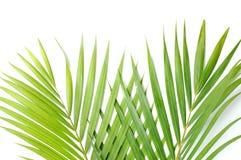 Palmbladen stock fotografie