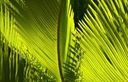 Palmbladen Royalty-vrije Stock Foto's