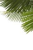 Palmbladen Stock Foto's