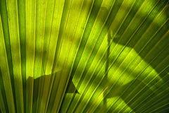 Palmbladen Stock Foto