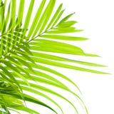 Palmbladen die in de wind slingeren Royalty-vrije Stock Afbeeldingen