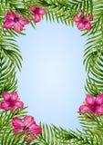 Palmbladen en tropische bloemachtergrond Stock Afbeeldingen