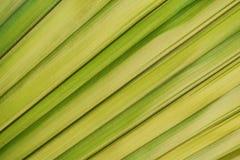 Palmbladen, groene en gele bladeren, mooie aard voor de achtergrond stock afbeelding