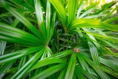 Palmbladen in het openbare park royalty-vrije stock foto