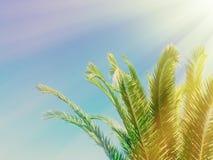 palmbladen in het zonlicht - zomerachtergronden, ontsnapping en vakantiesconcept royalty-vrije stock afbeeldingen