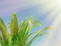 palmbladen in het zonlicht - zomerachtergronden, ontsnapping en vakantiesconcept stock afbeeldingen