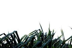 Palmbladen op wit geïsoleerde achtergrond voor groene gebladerteachtergrond stock fotografie