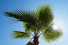 Palmbladen tegen de blauwe hemel Stock Afbeeldingen