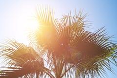 Palmbladen tegen de blauwe hemel Royalty-vrije Stock Foto