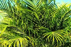 Palmbladenachtergrond royalty-vrije stock foto