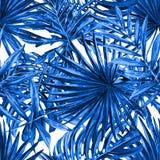 Palmbladenachtergrond Stock Foto's