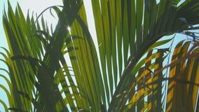 Palmbladenbeweging in de wind, lensgloed stock videobeelden