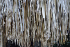 Palmbladendaling stock foto