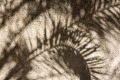Palmbladenschaduw Royalty-vrije Stock Afbeelding