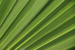 Palmbladentextuur Royalty-vrije Stock Foto's