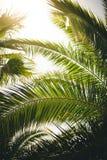 Palmbladeren Royalty-vrije Stock Afbeeldingen