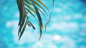 Palmbladeren en poolwater tijdens kalme zonnige dag 1920x1080 stock footage