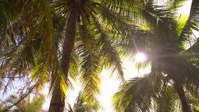 Palmbladeren met zonovergoten op de achtergrond stock videobeelden