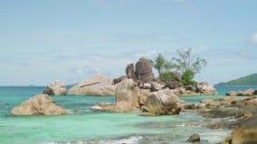 Palmbladeren op zon en blauwe hemelachtergrond achtergrond van het het strandconcept van de weekendvakantie de tropische, het con stock video