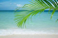 Palmbladet, det blåa havet och tropisk vit sand sätter på land royaltyfria foton