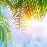 Palmbladgräns Arkivfoto