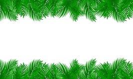 Palmbladkader op wit geïsoleerde achtergrond vector illustratie
