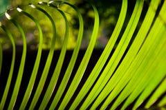 Palmbladmakro Royaltyfri Fotografi