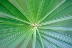 Palmbladmitt som utstrålar gjord randig blå gräsplan Arkivbilder