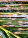 Palmbladpatronen Stock Afbeeldingen