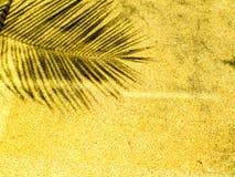 Palmbladskugga på sandsten Royaltyfria Foton