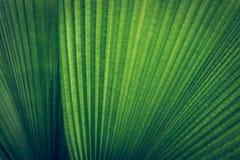 Palmbladtextuur Stock Afbeeldingen