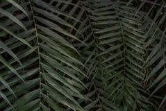 Palmbladtextuur Royalty-vrije Stock Foto