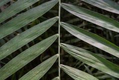 Palmbladtextuur Royalty-vrije Stock Afbeelding