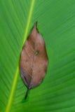 Palmbladtextuur sluiten-omhoog Stock Foto