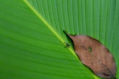 Palmbladtextuur sluiten-omhoog Stock Afbeelding