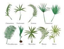 Palmbladuppsättning Isolerat på vit kulört Royaltyfri Foto